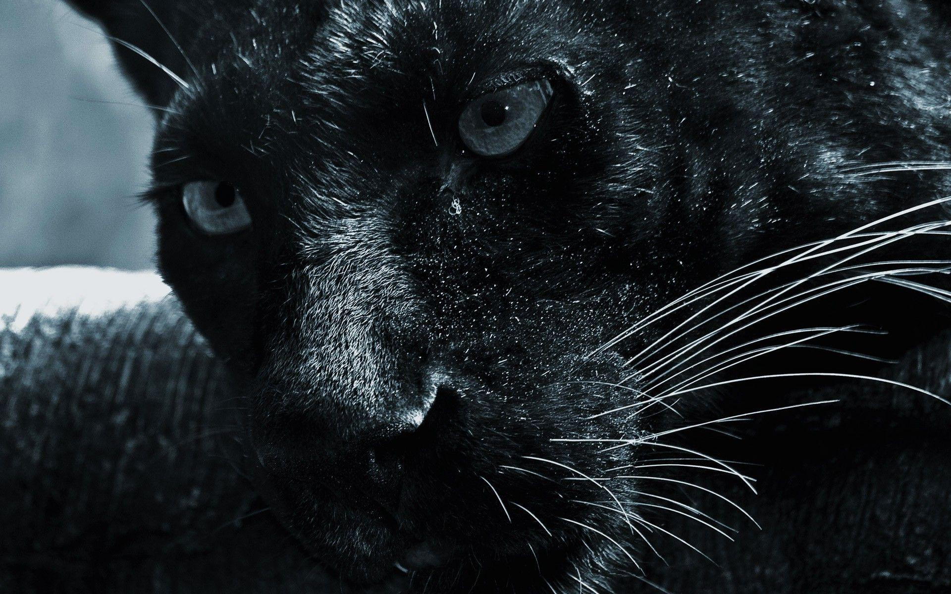 3d Black Jaguar Wallpapers Wallpaper Cave