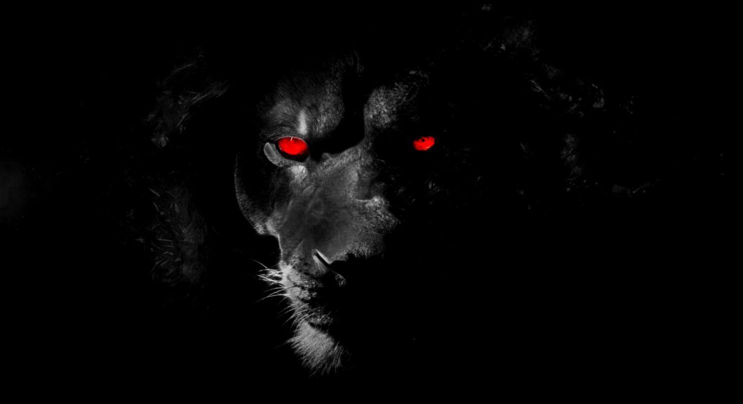 Black Jaguar Eyes Wallpaper