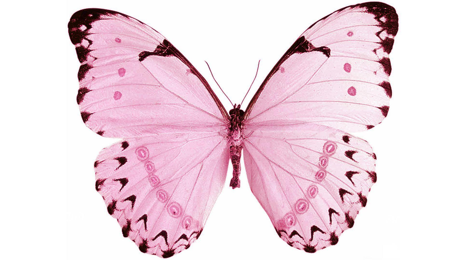 Wallpapers Butterfly Pink Backgrounds White - Wallpaper Cave