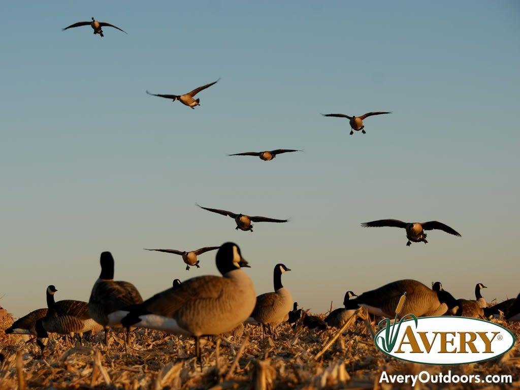 Goose Hunting Backgrounds