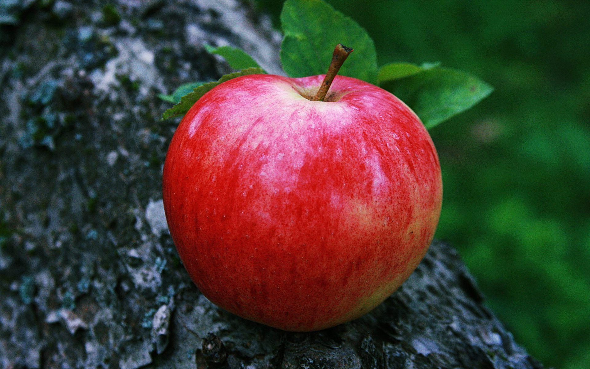 [76+] Red Apple Wallpapers on WallpaperSafari |Red Apples Wallpaper