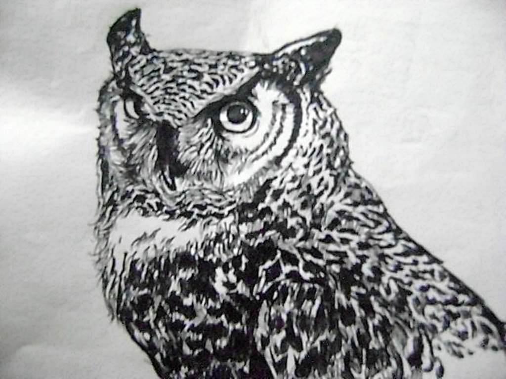 Owl Tumblr Wallpapers Wallpaper Cave