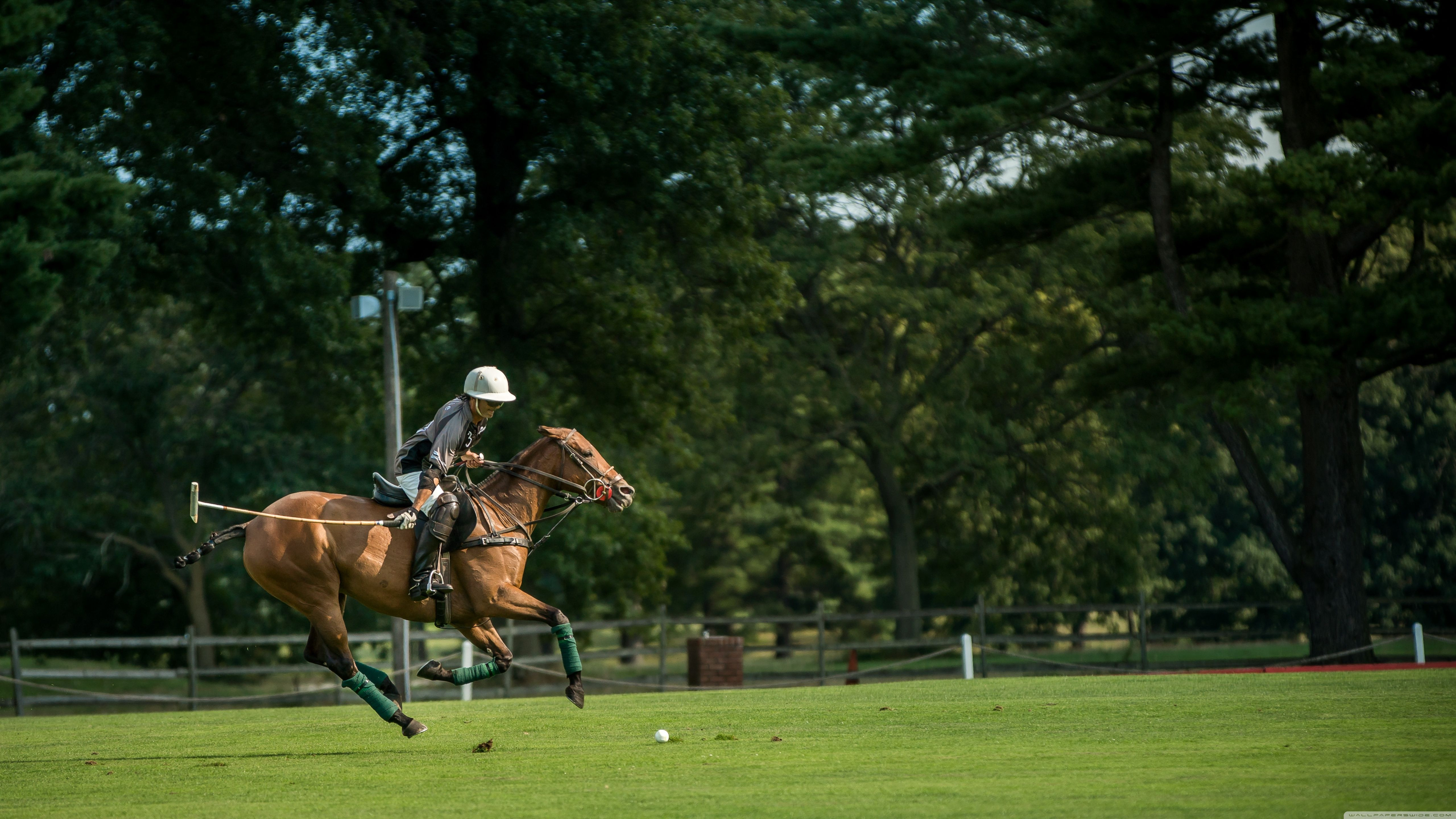 Polo at the Park ❤ 4K HD Desktop Wallpaper for • Wide & Ultra ...