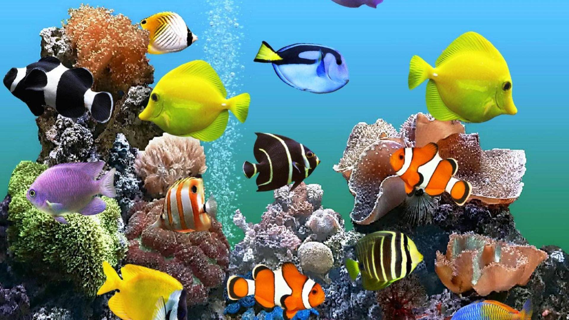 Marine Aquarium HD Wallpapers