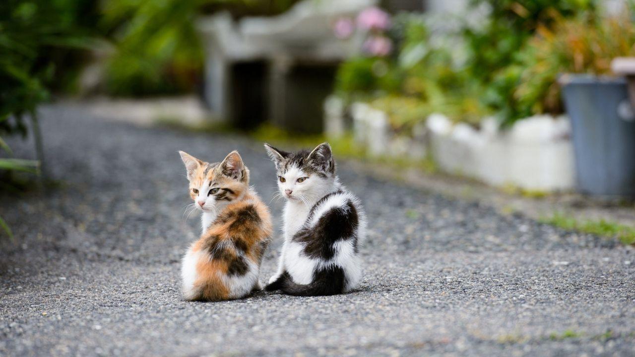 Cute Cat Wallpapers Kitten Wallpaper Cave