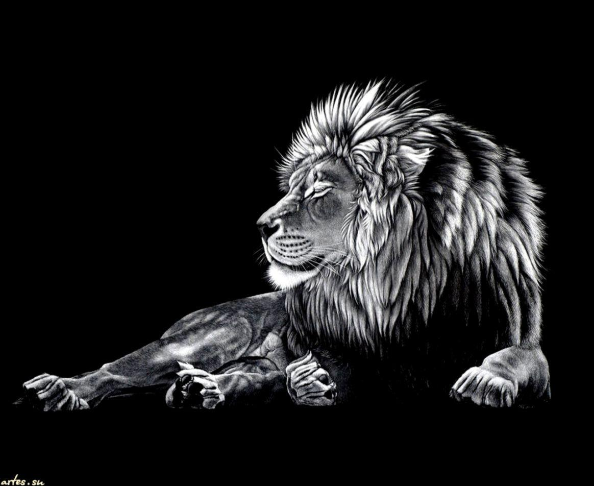 Black Lion Wallpapers Wallpaper Cave