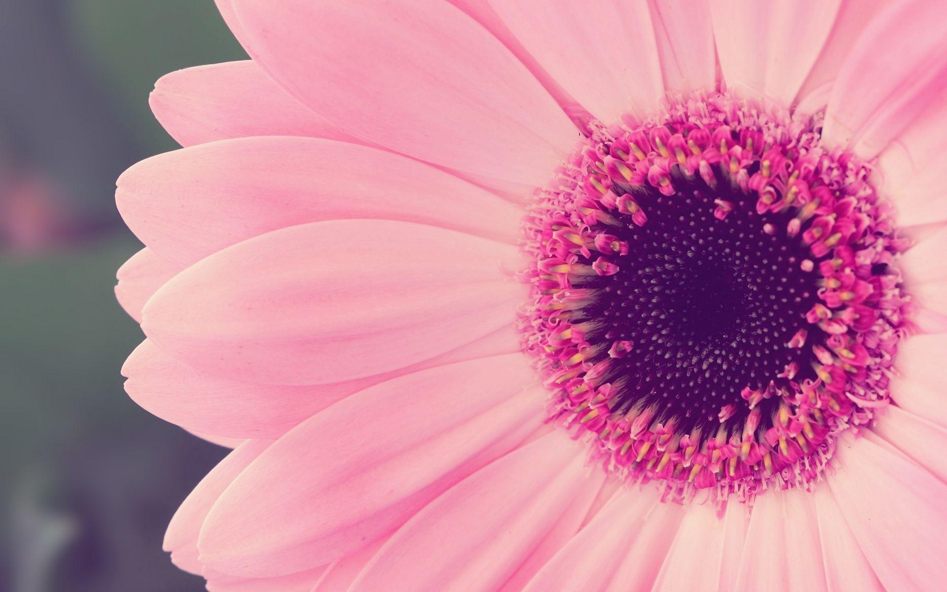 Wallpaper For Desktop Pink