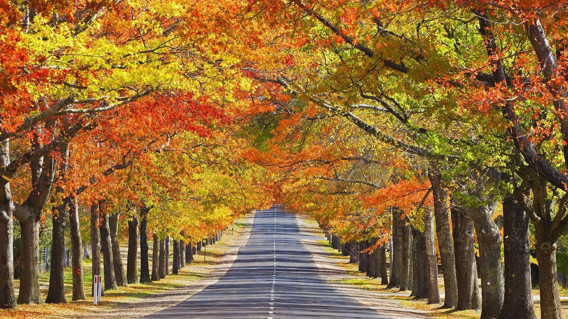 Beautiful Road Wallpapers
