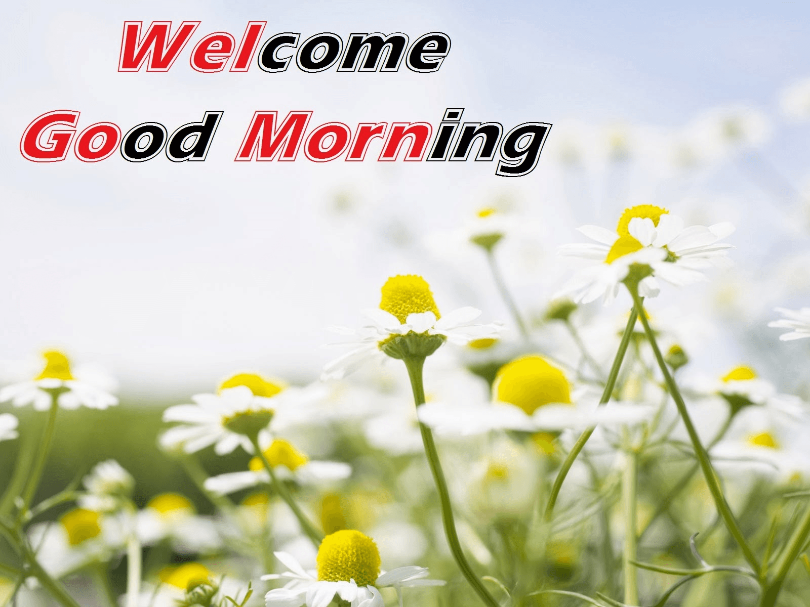 Good Morning Friends Wallpapers For Facebook Wallpaper Cave
