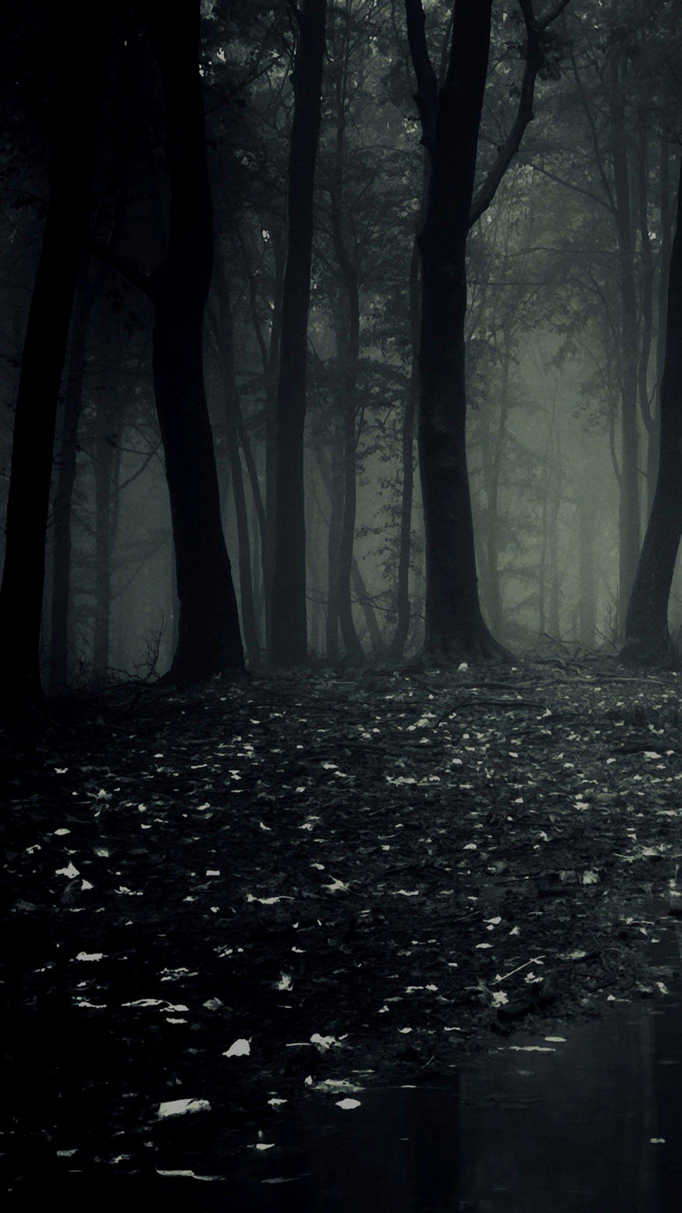 Dark Forest HD Wallpapers - Wallpaper Cave