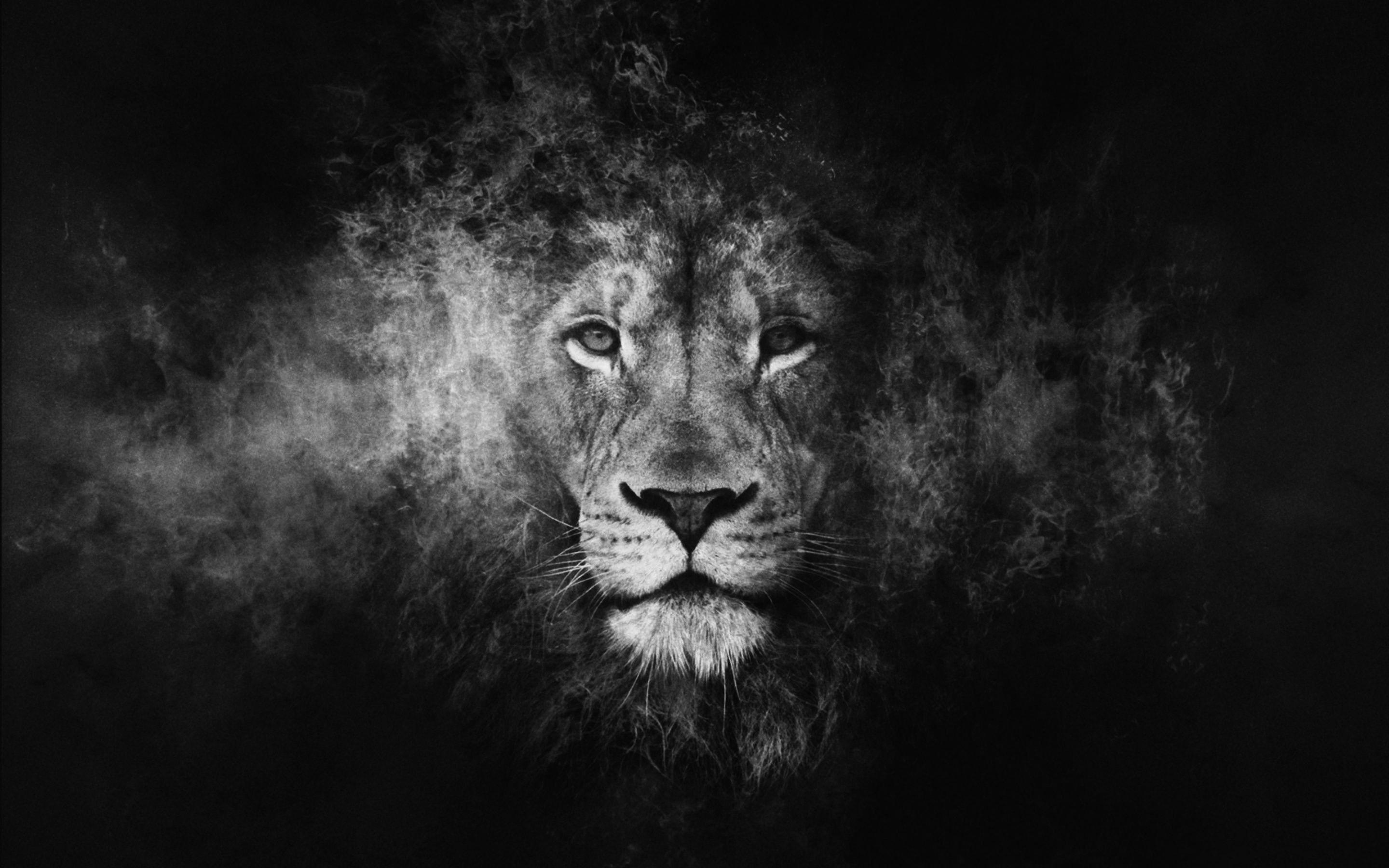 Wallpapers Black Lion Wallpaper Cave
