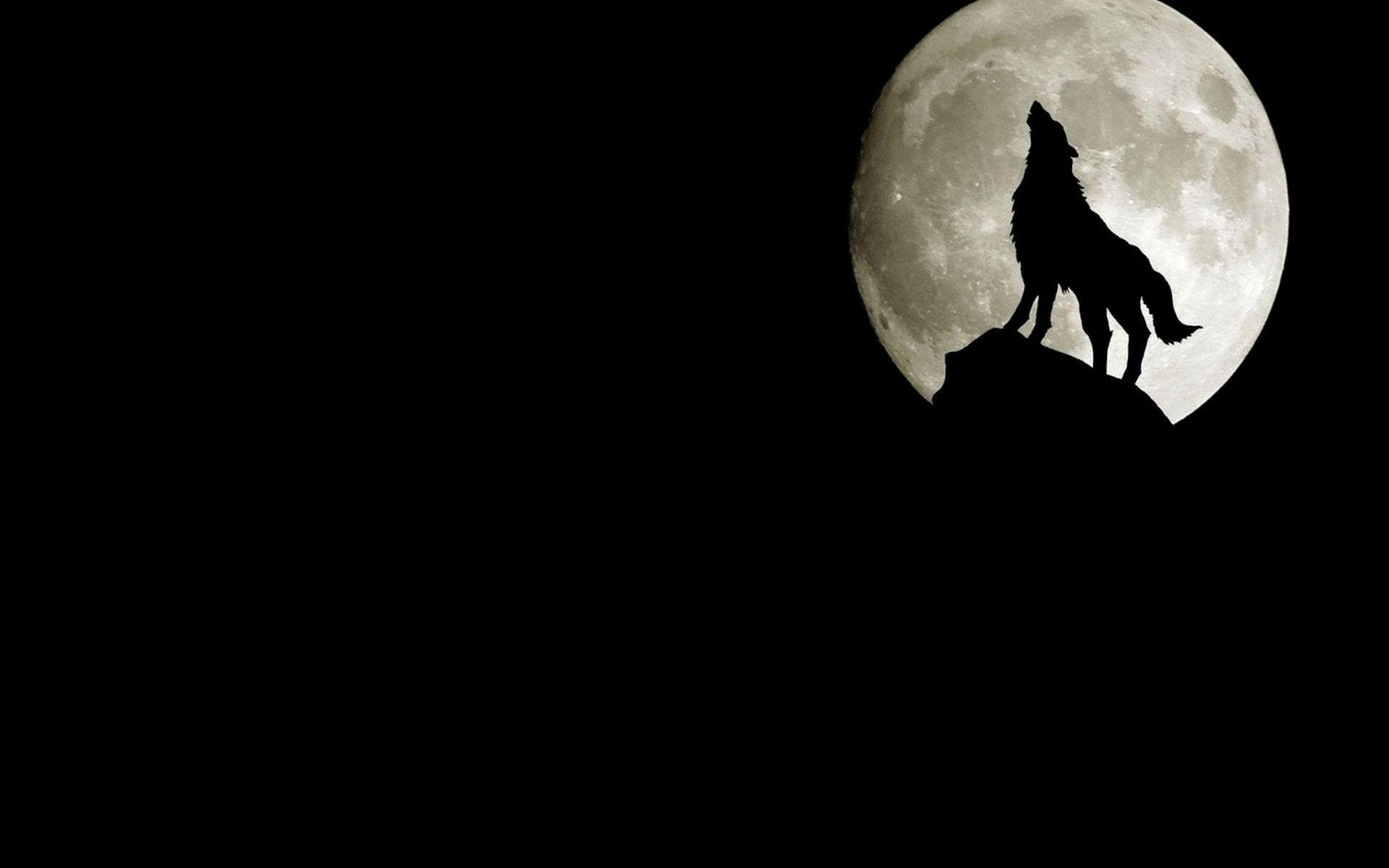 Wolf Howling At Moon Dark Free Wallpapers HD