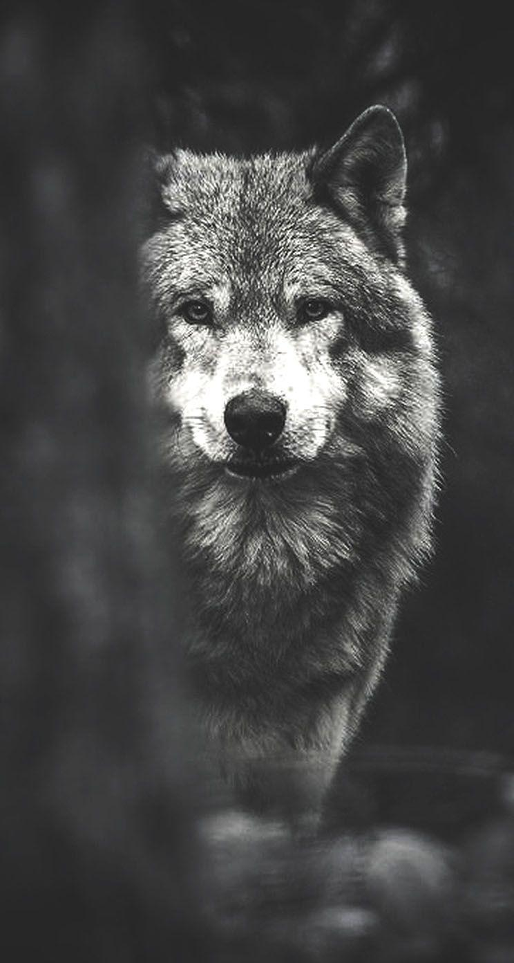 Black Wolf HD Wallpapers - Wallpaper Cave