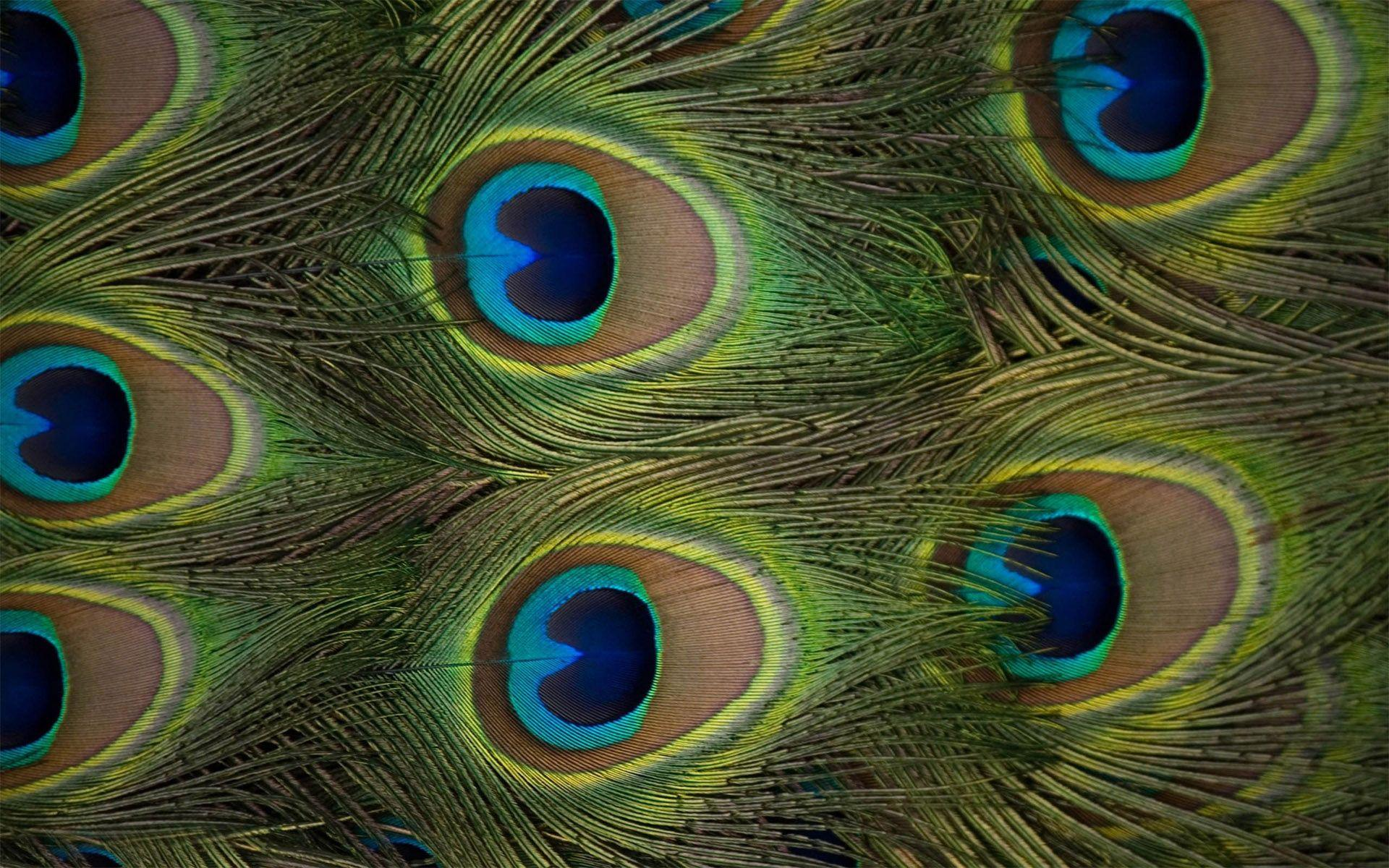 Beautiful peacock feather wallpapers wallpaper cave - Beautiful peacock feather ...