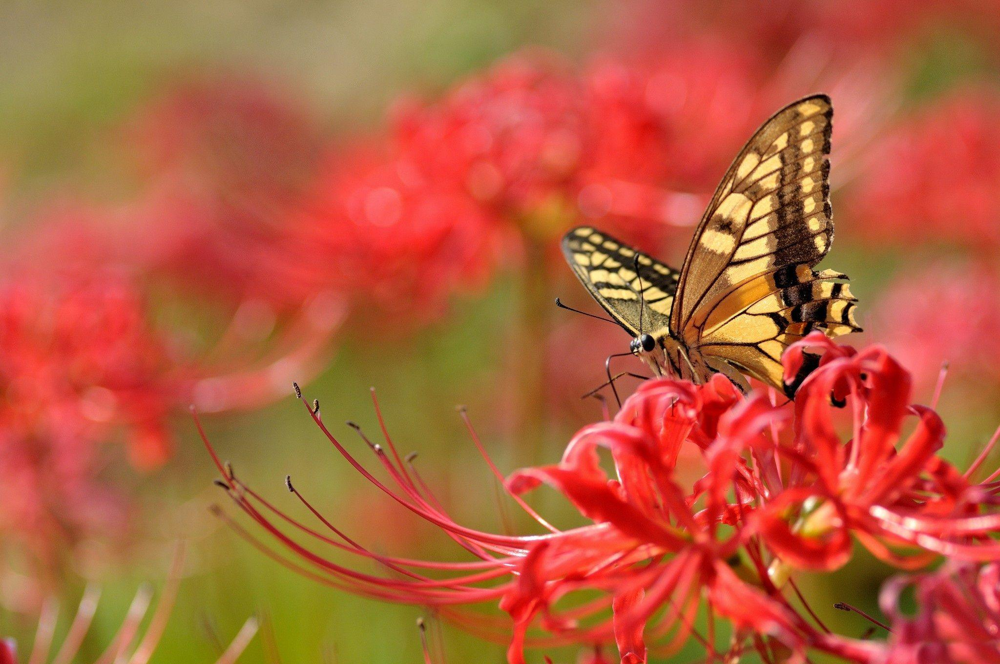 Flowers With Butterfly Wallpapers HD - Wallpaper Cave