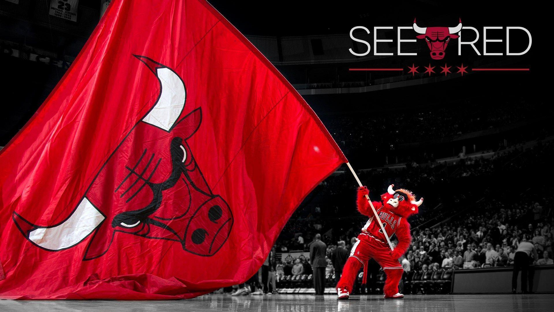 chicago bulls wallpapers free