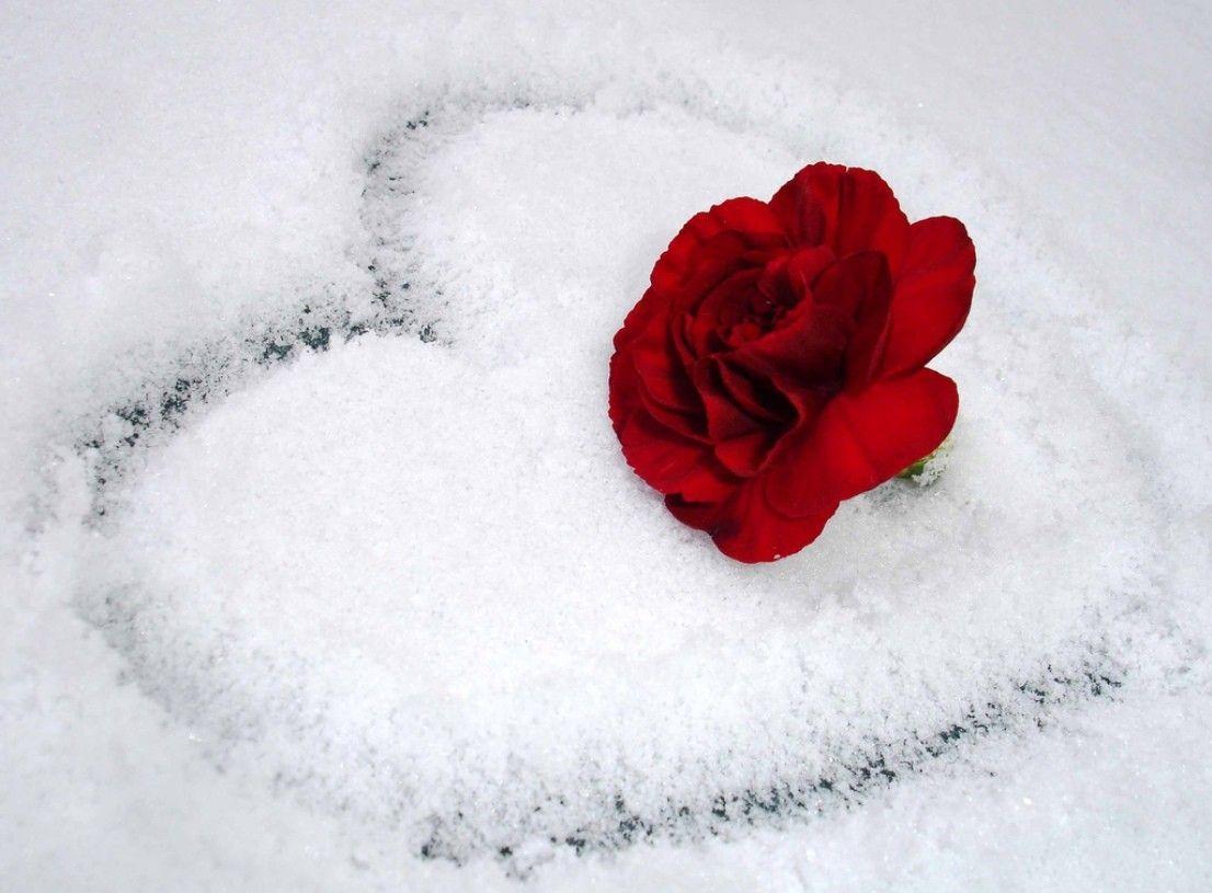 Розы в снегу открытки