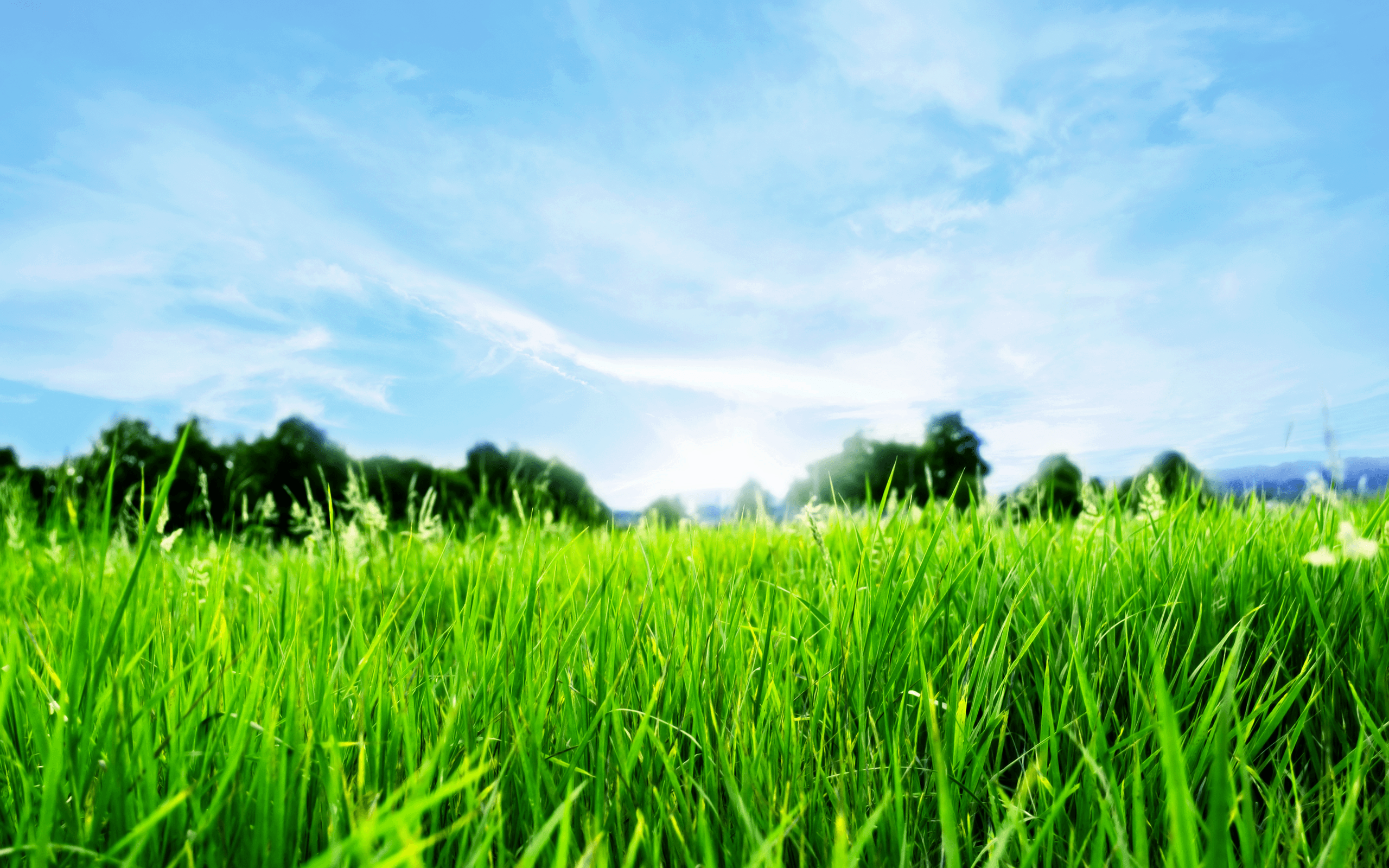 Lawn Wallpapers Wallpaper Cave