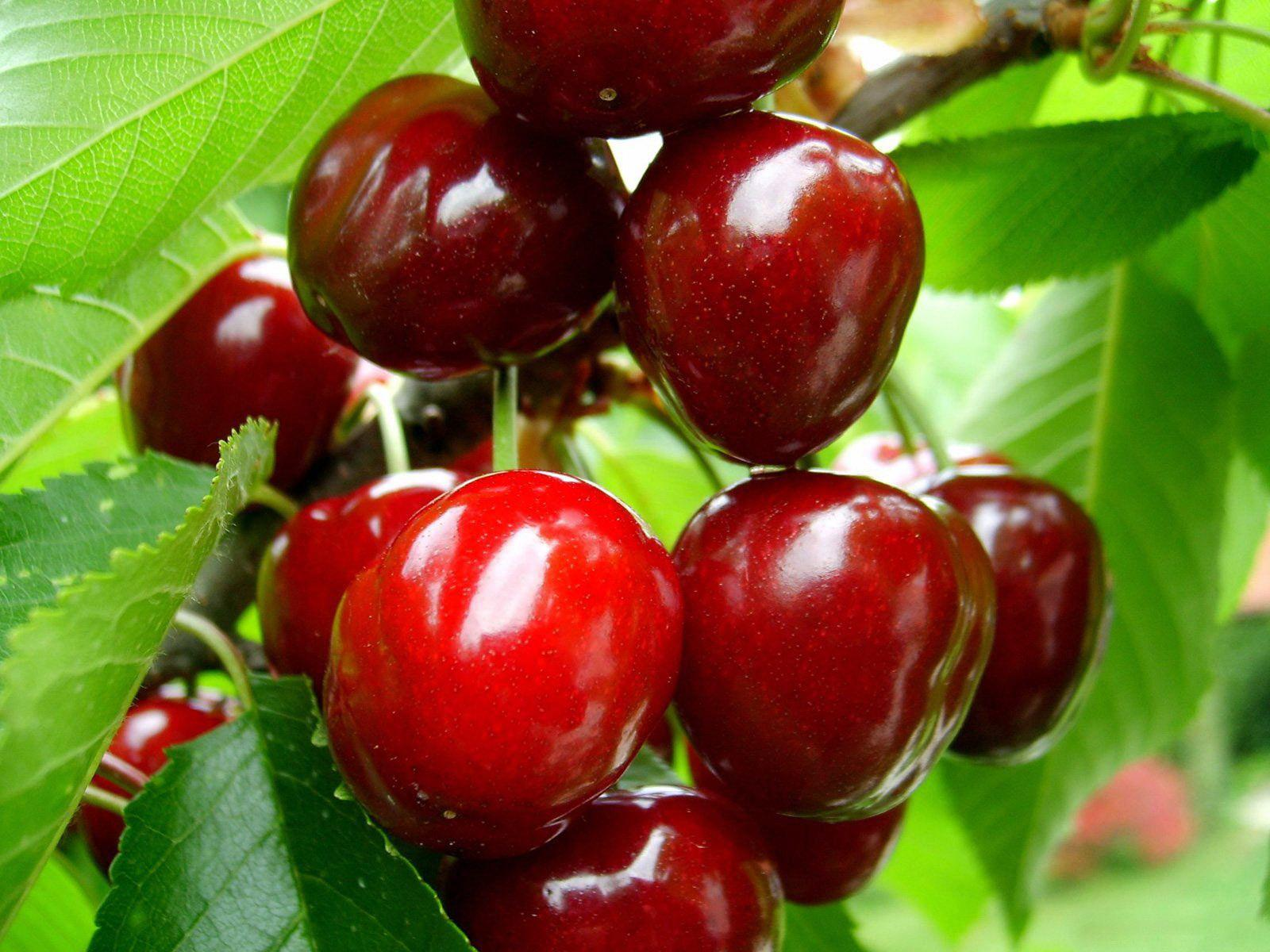Fruits Tree Wallpapers Wallpaper Cave