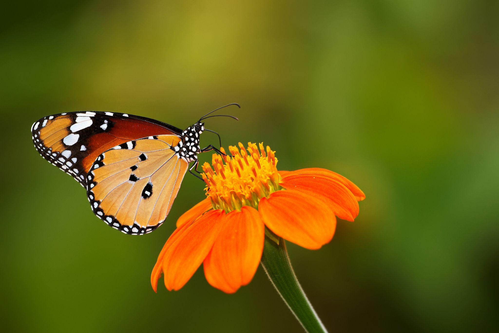 Cute Butterfly Wallpapers Wallpaper Cave