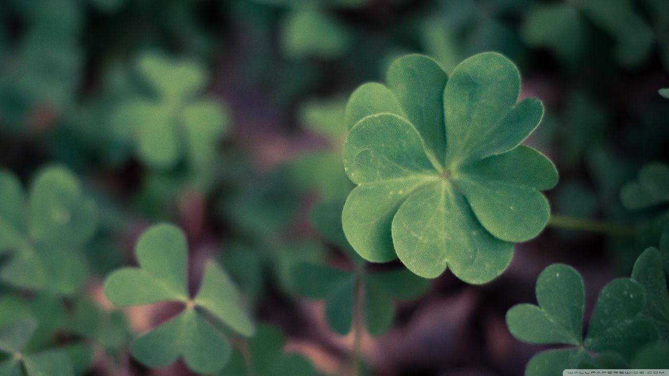 Lucky Clover ❤ 4K HD Desktop Wallpapers for 4K Ultra HD TV • Wide