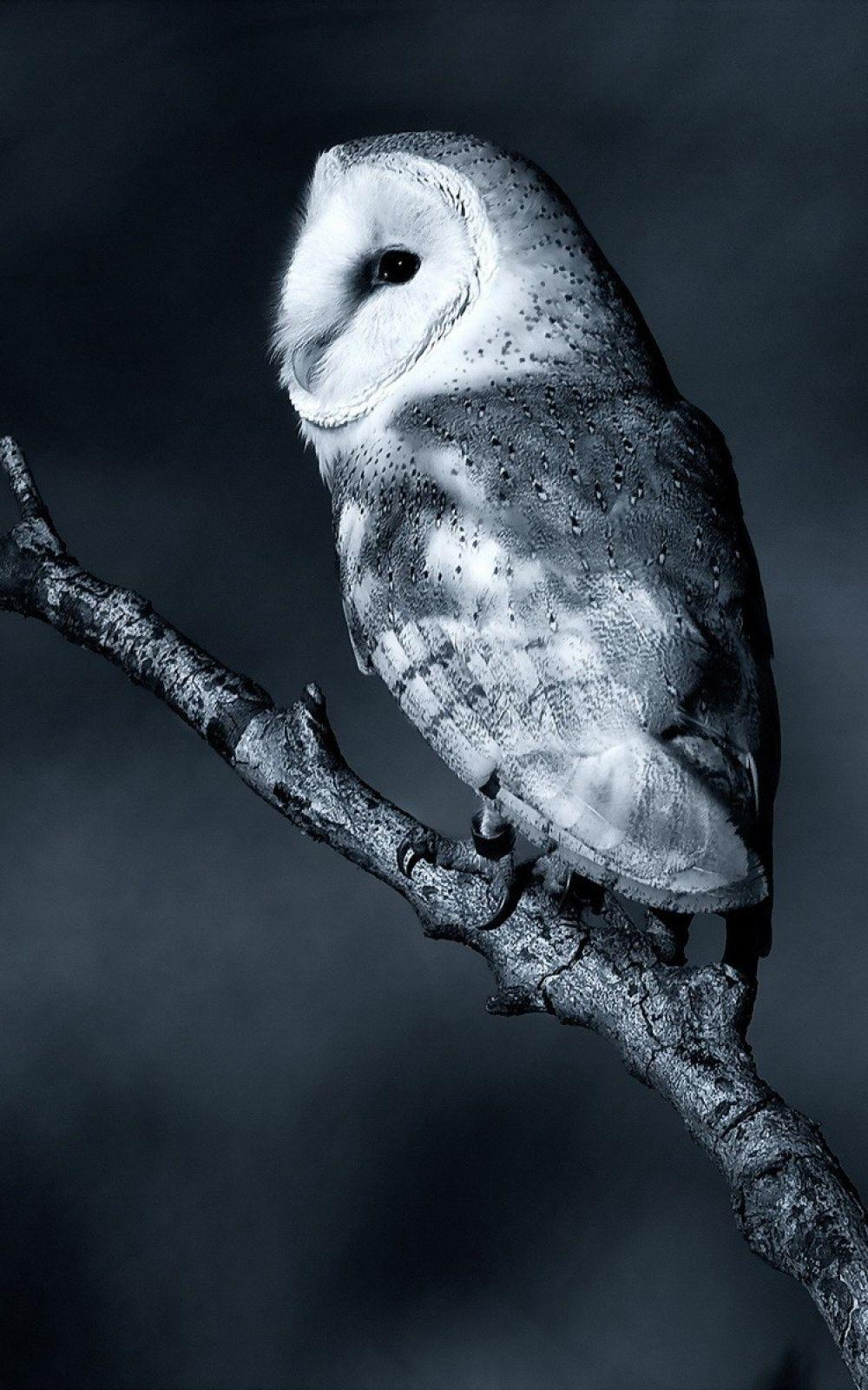 Owl Wallpapers For Android Wallpaper Cave