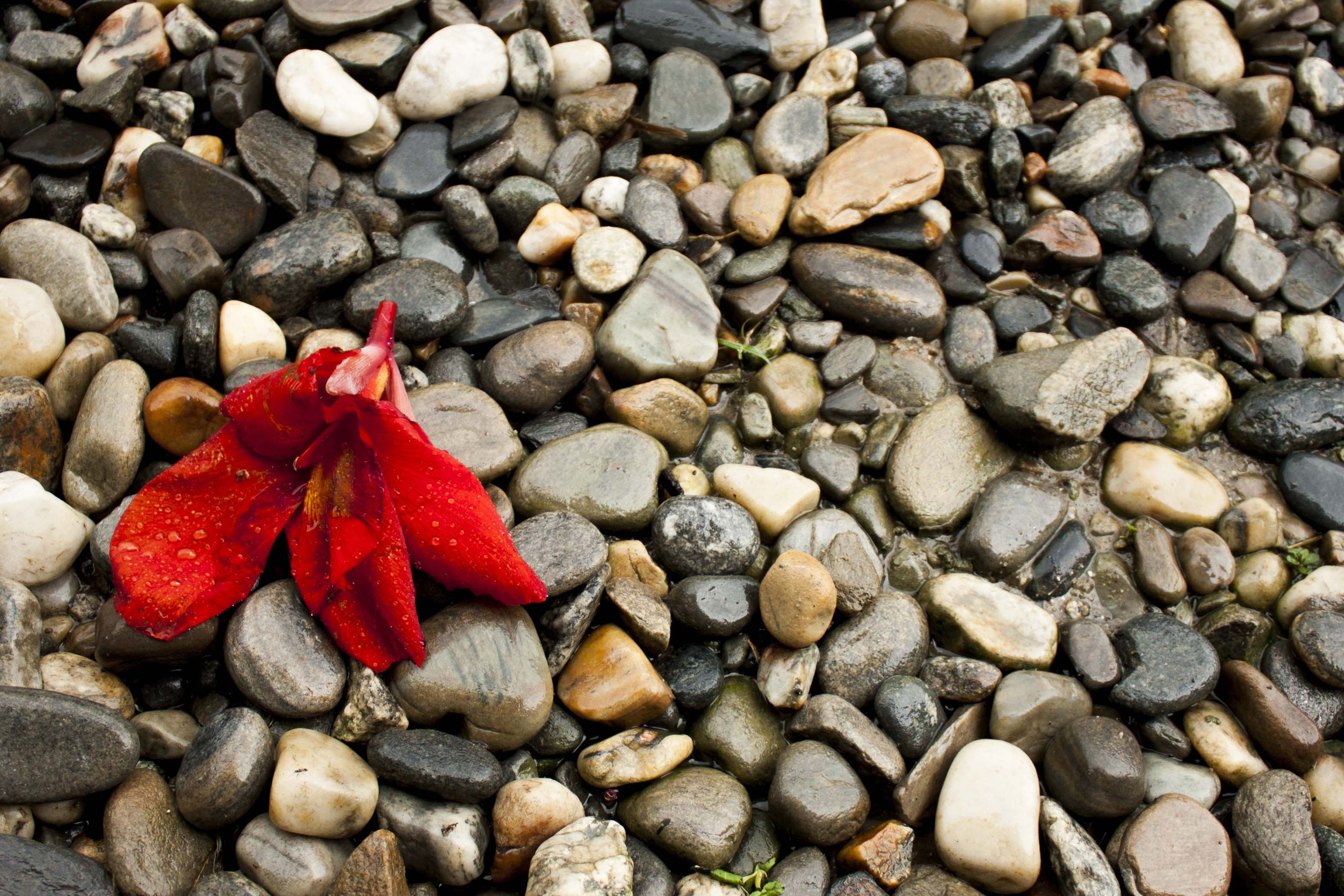 HD Pebbles Pebble Nature Wallpaper | webextensionline