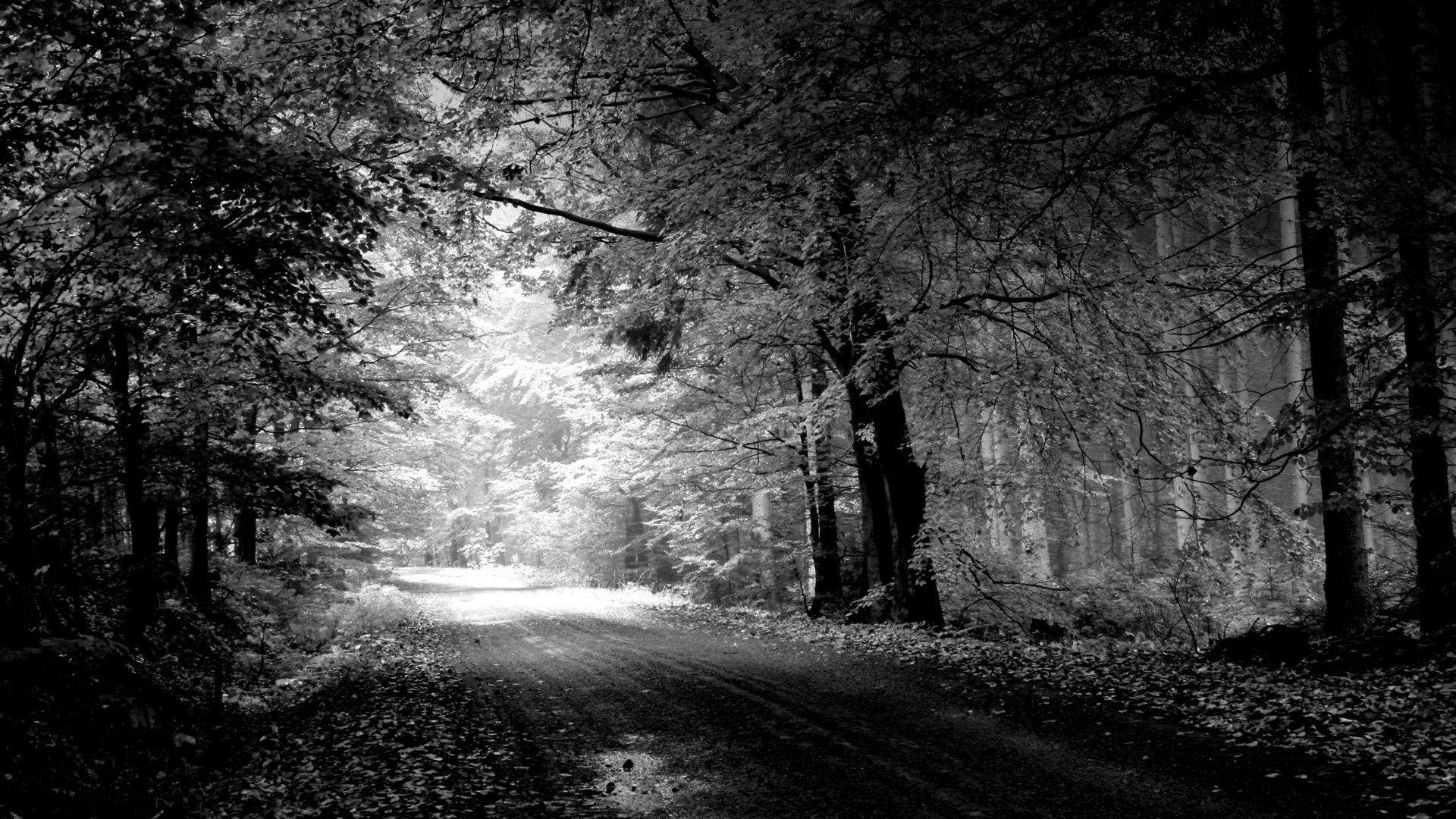 Anime Black And White Scenery Hd Wallpapers Wallpaper Cave