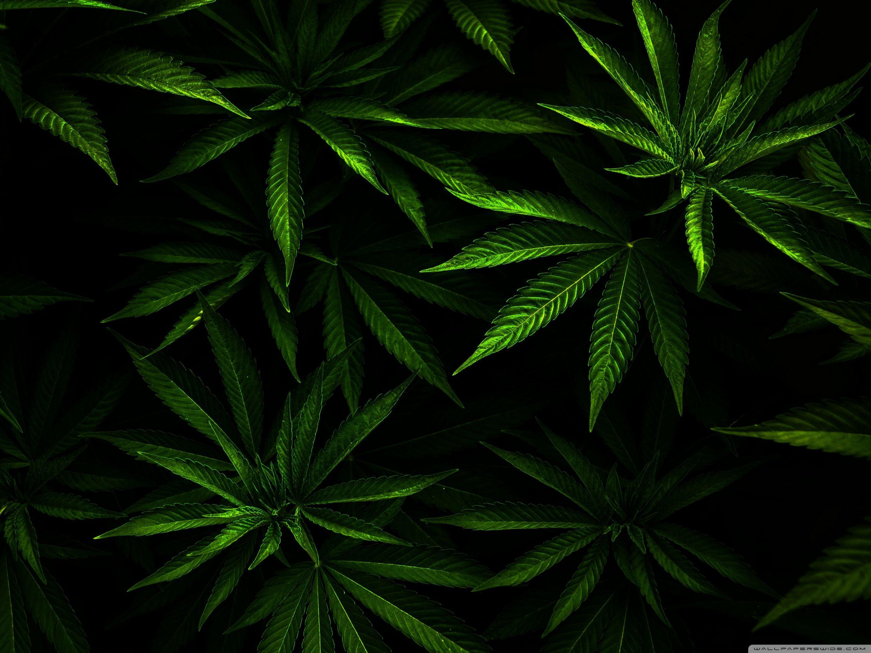 Download Weed Wallpaper 3A6 | Verdewall