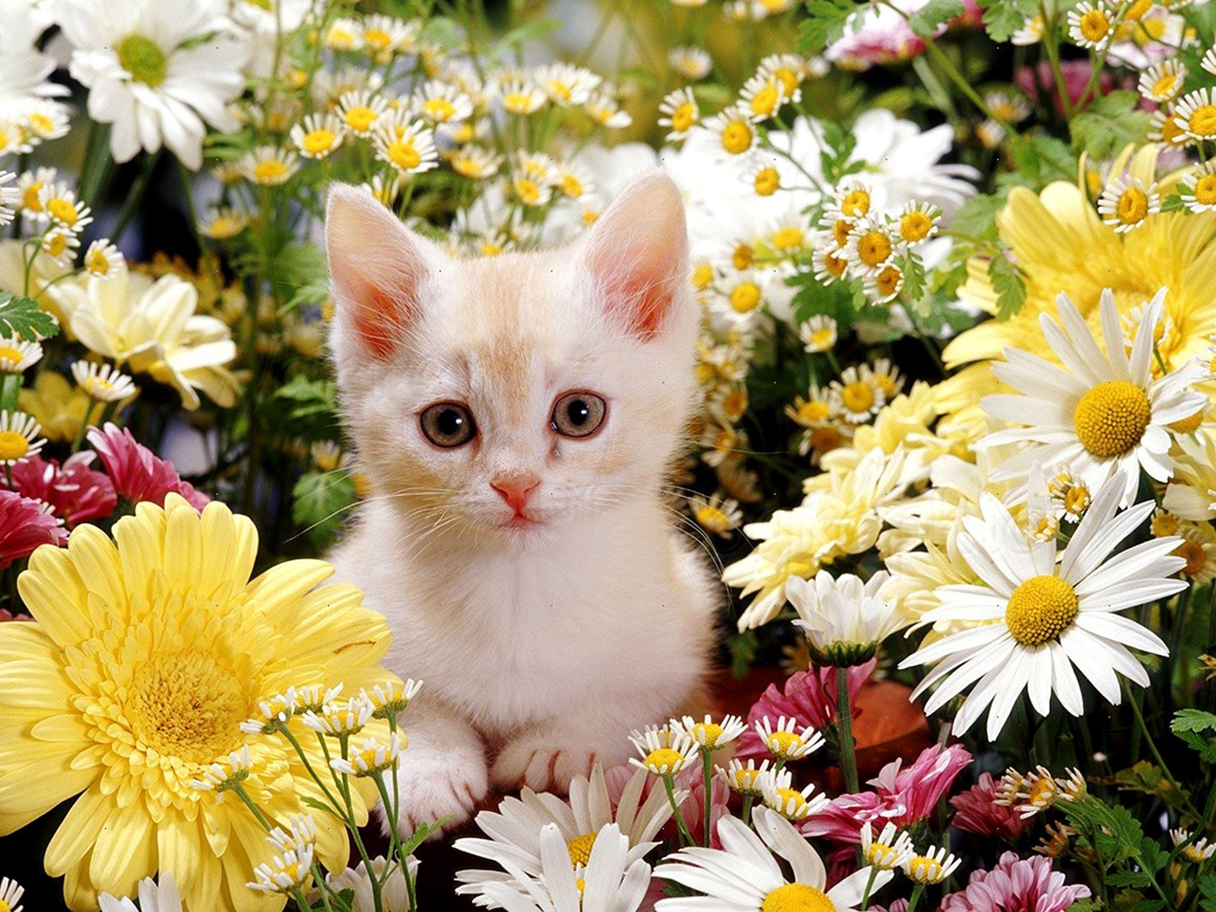 Cute Flower E Hd Wallpaper Flowers Healthy