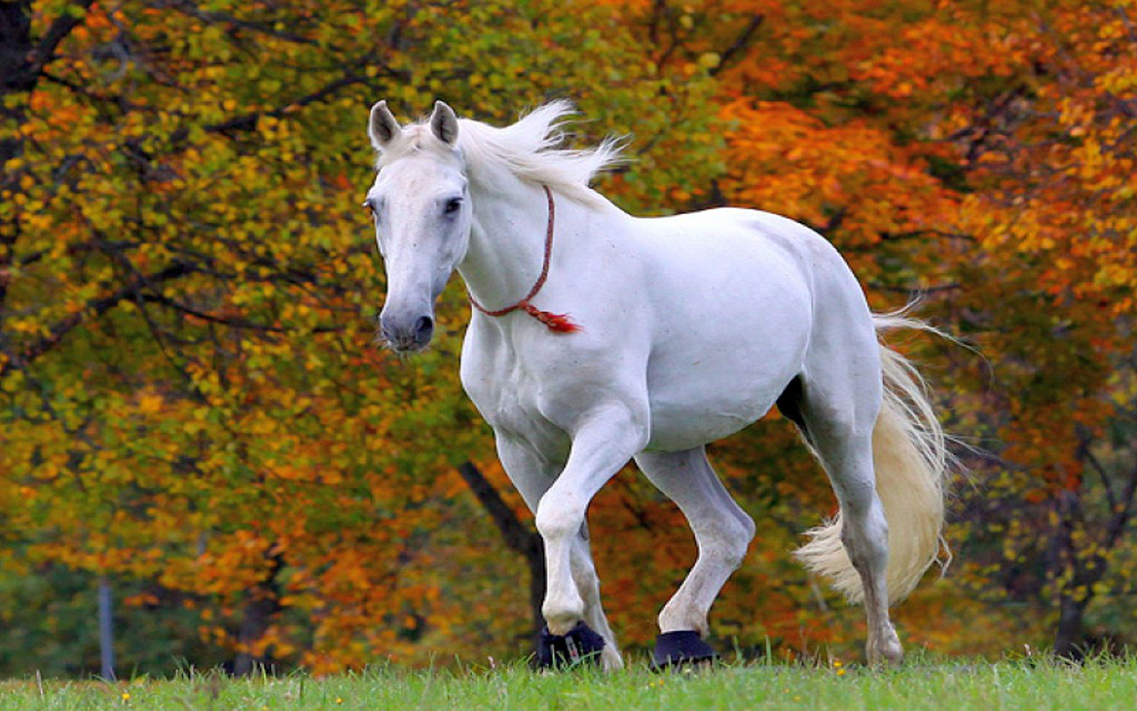 Hd White Horse Wallpapers Wallpaper Cave