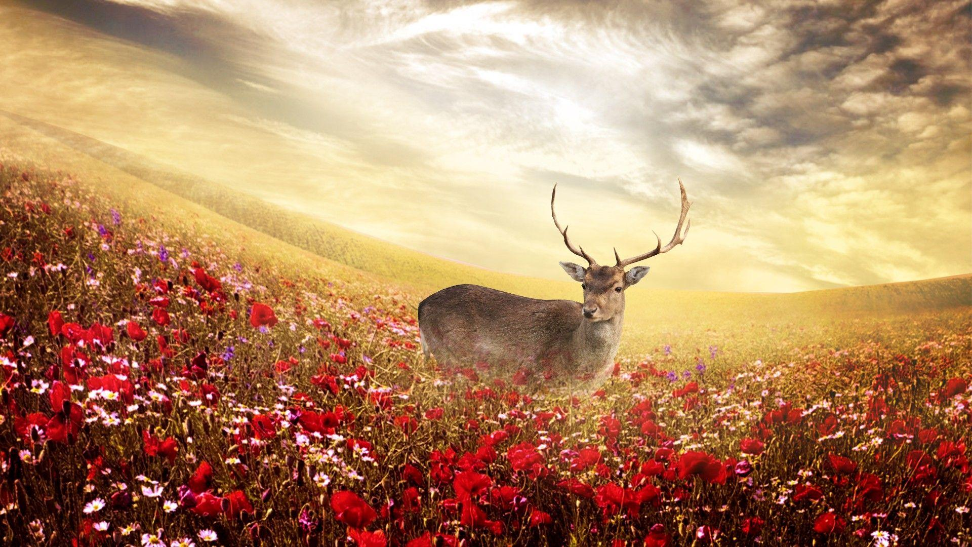 Deer backgrounds wallpaper cave - Free hd background images ...