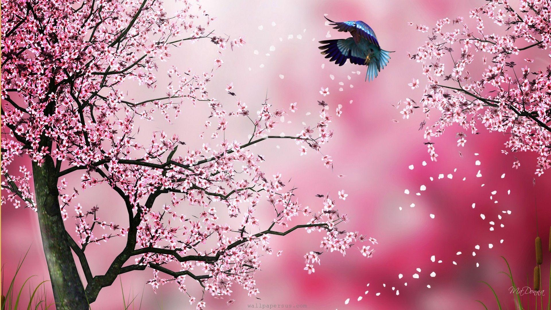 Cherry Blossom Drawing Wallpapers at GetDrawings