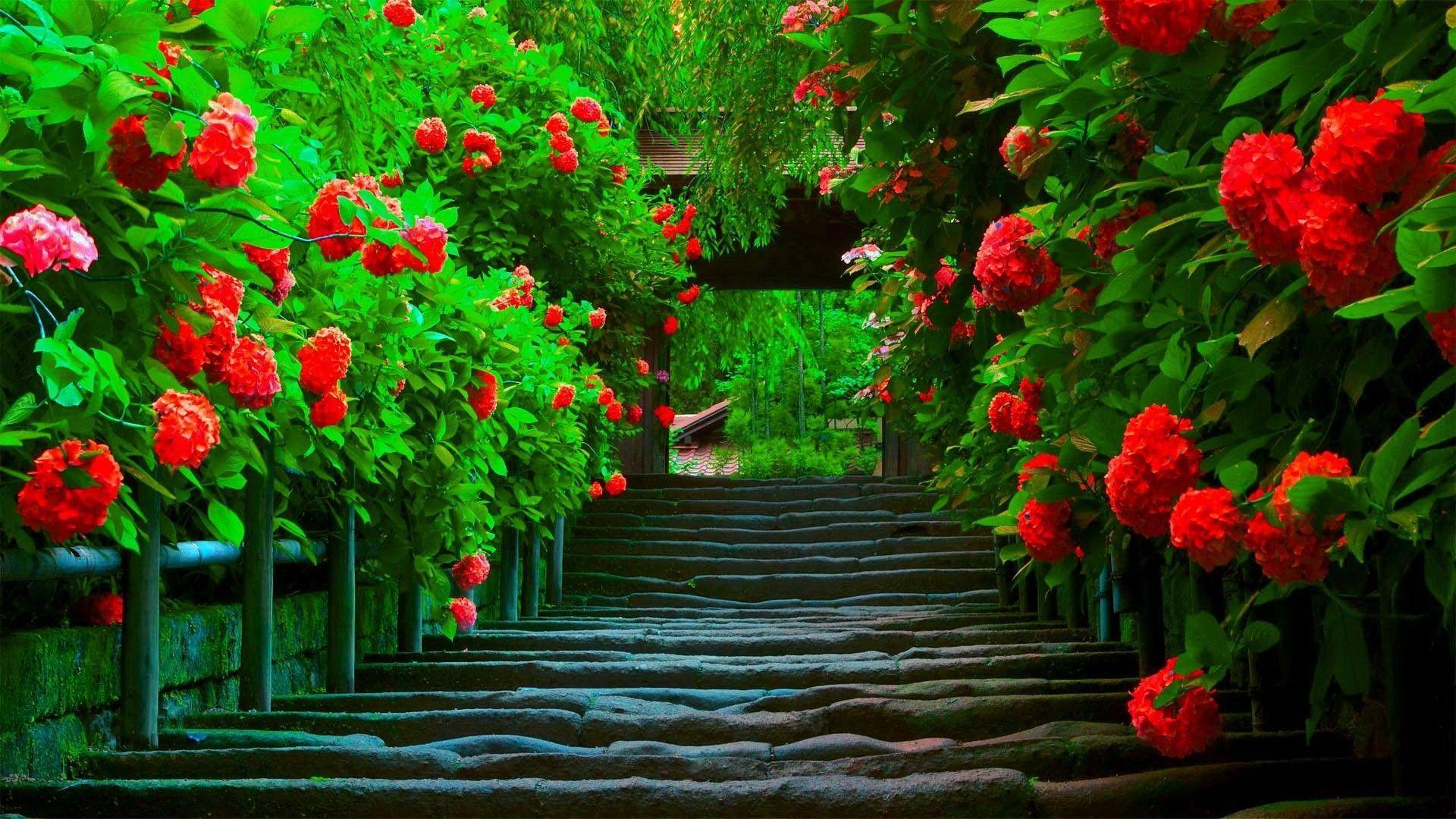 Beautiful Nature Love Wallpapers Wallpaper Cave