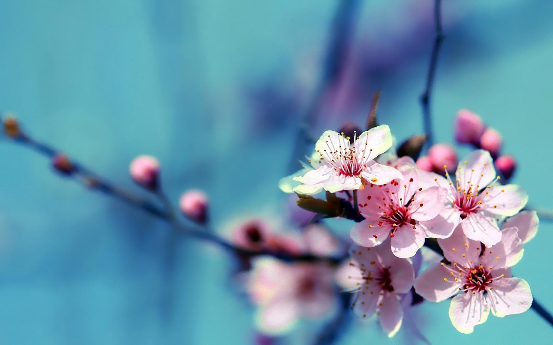 april-flower