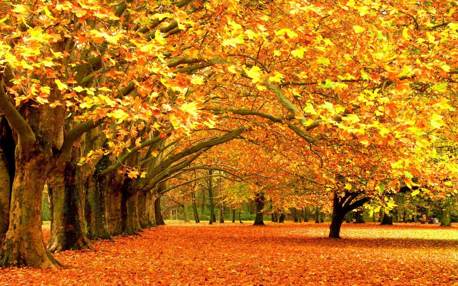 Beautiful Autumn Trees Wallpapers Wallpaper Cave
