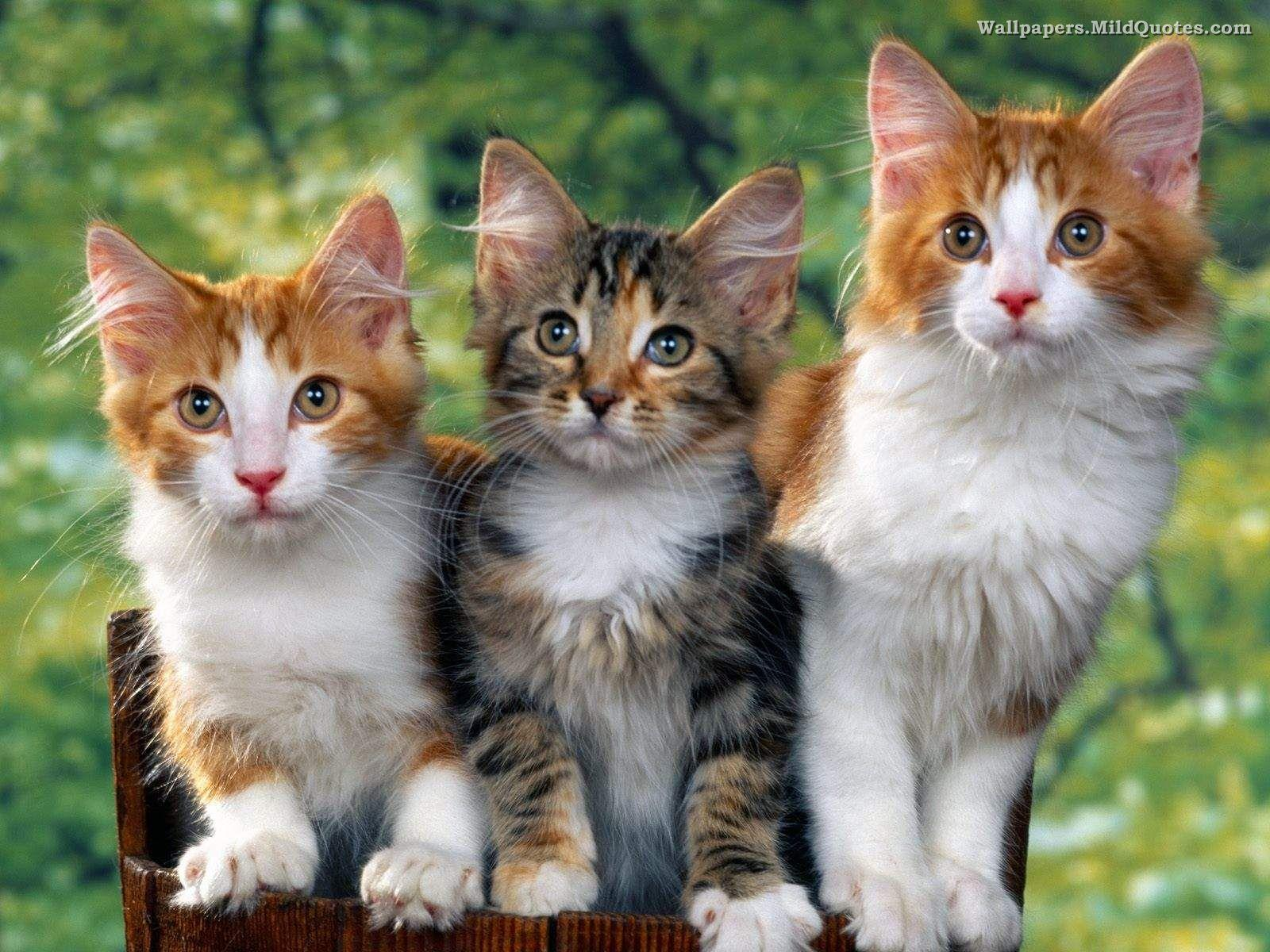 Cute Animal Wallpapers For Desktop Background Full Screen 9