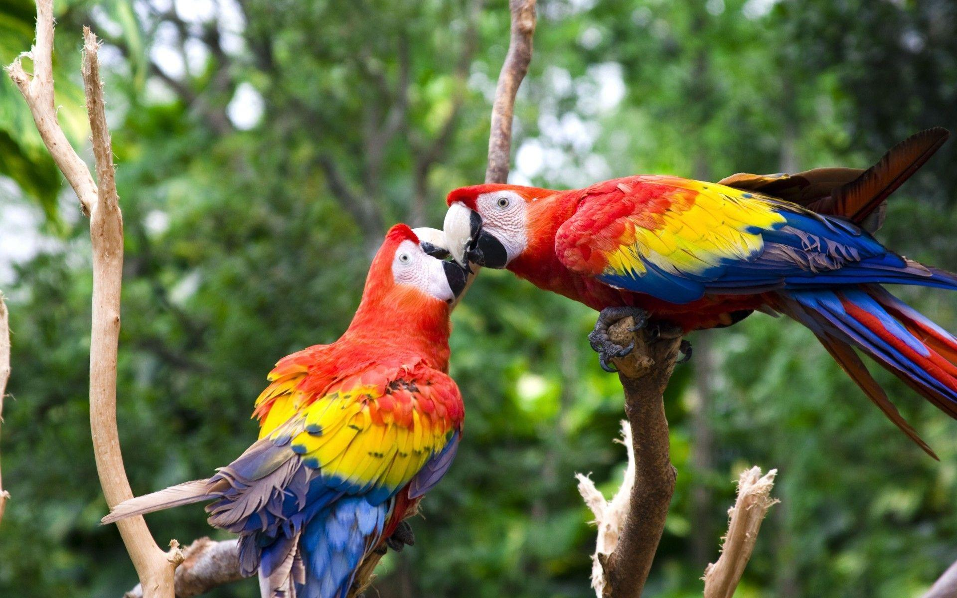 Colorful Birds Wallpapers Wallpaper Cave
