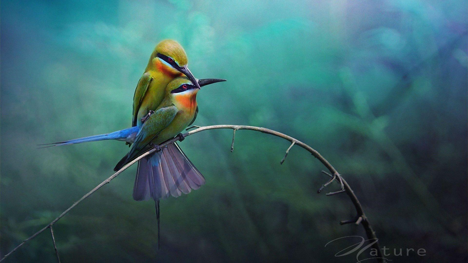 Love Birds Hd Wallpapers Wallpaper Cave