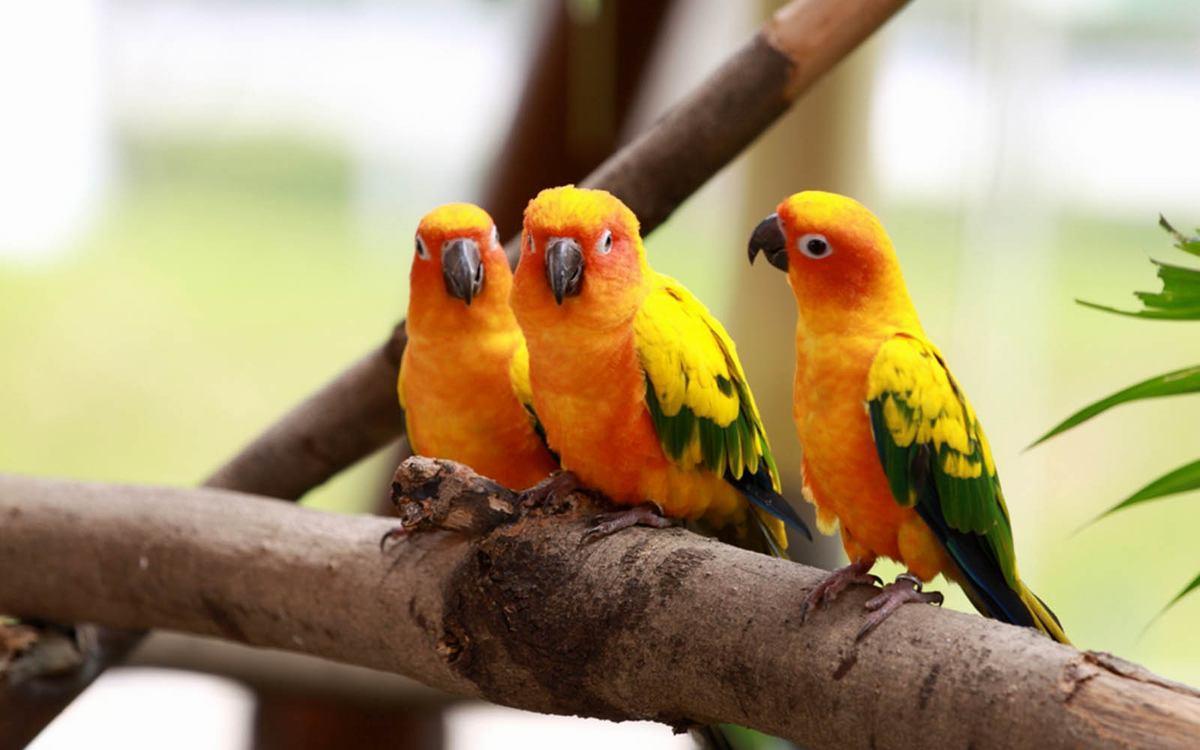 Wallpapers Love Birds Desktop Wallpapers: LOVE BIRDS HD WALLPAPERS