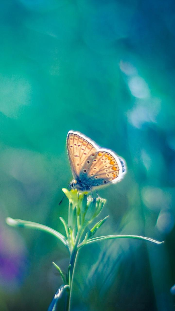 Colourfull Butterfly Mobile Wallpapers - Wallpaper Cave
