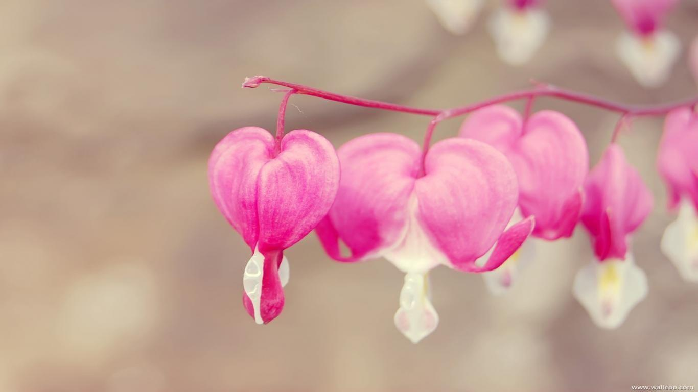 cute love wallpapers for facebook - wallpaper cave