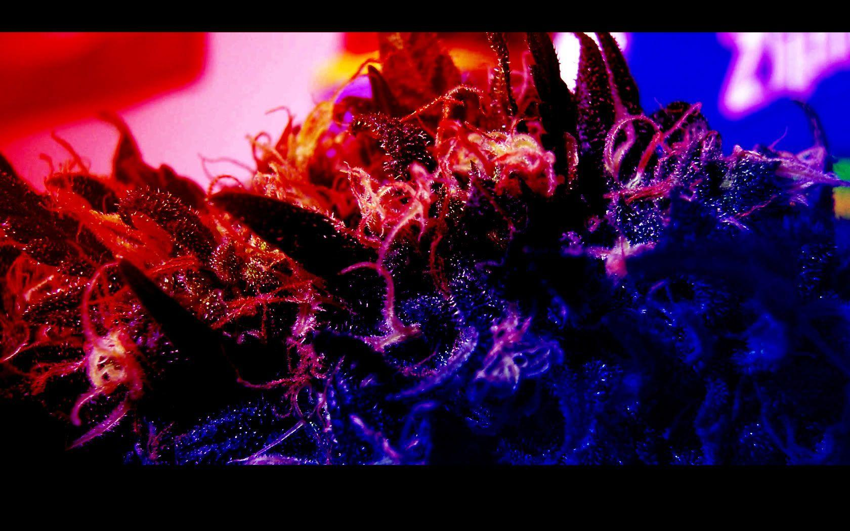 Trippy Smoke Weed Backgrounds Wallpaper Cave