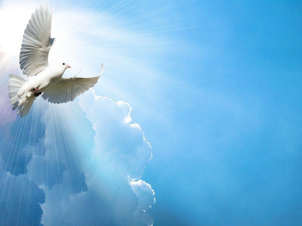Христианские картинки с голубем, начальнику мужчине