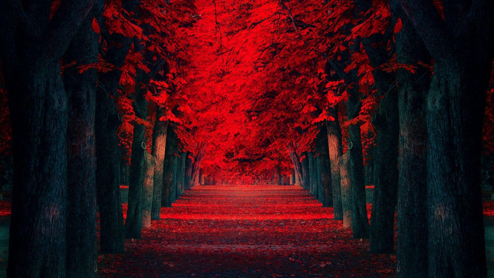 Wallpapers Hd Red Wallpaper Cave