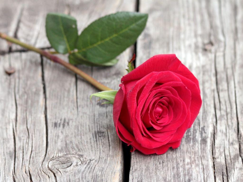 Red Rose HD Wallpapers - Wallpaper Cave