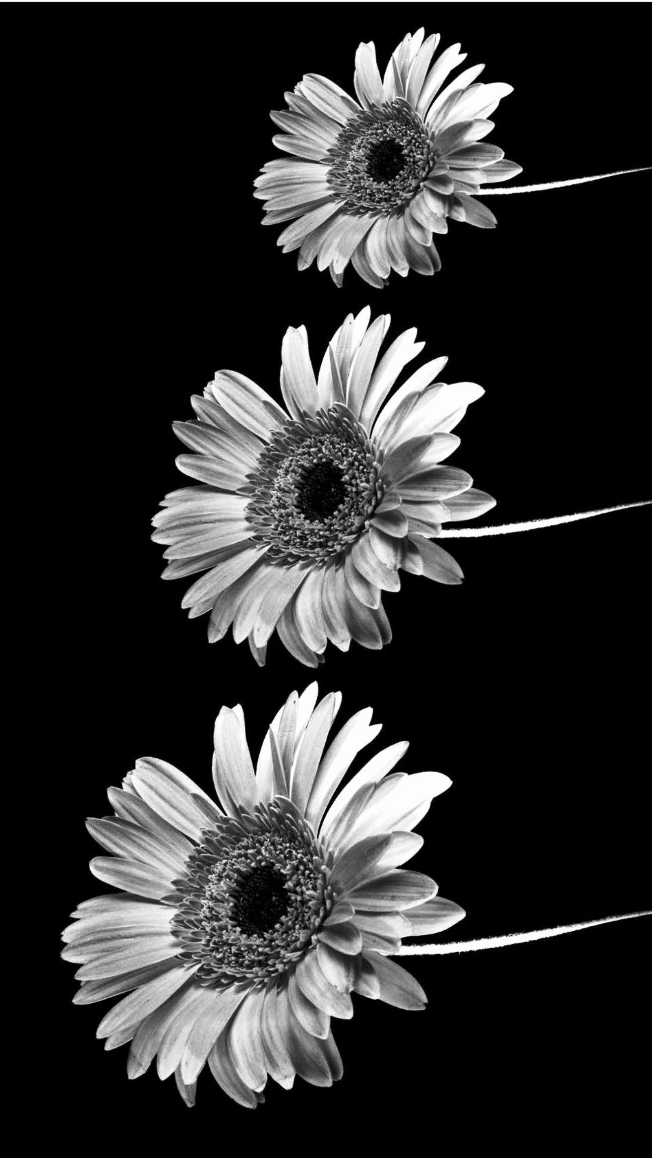Iphone wallpaper tumblr awesome black and white iphone wallpapers