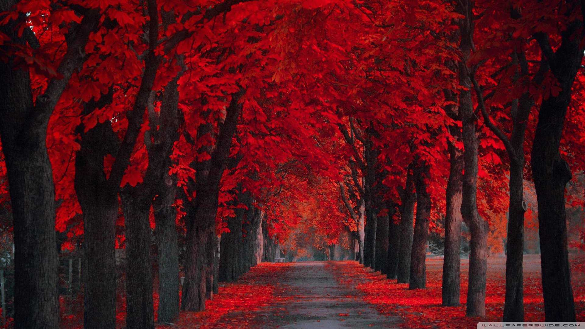 Red Colour HD Wallpapers - Wallpaper Cave
