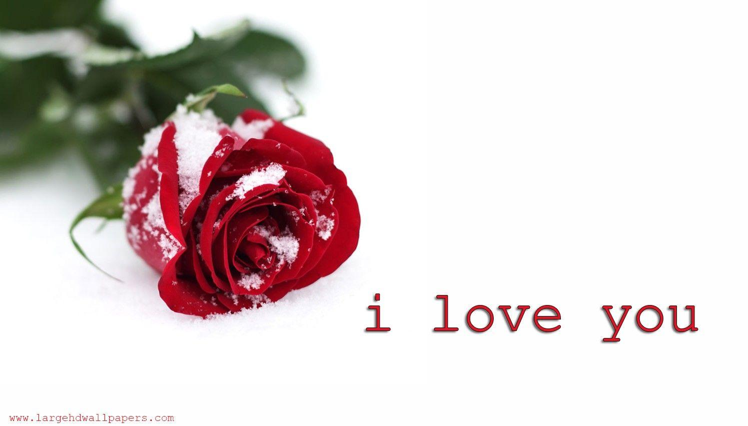 Rose I Love You Amazing Wide HD Wallpapers