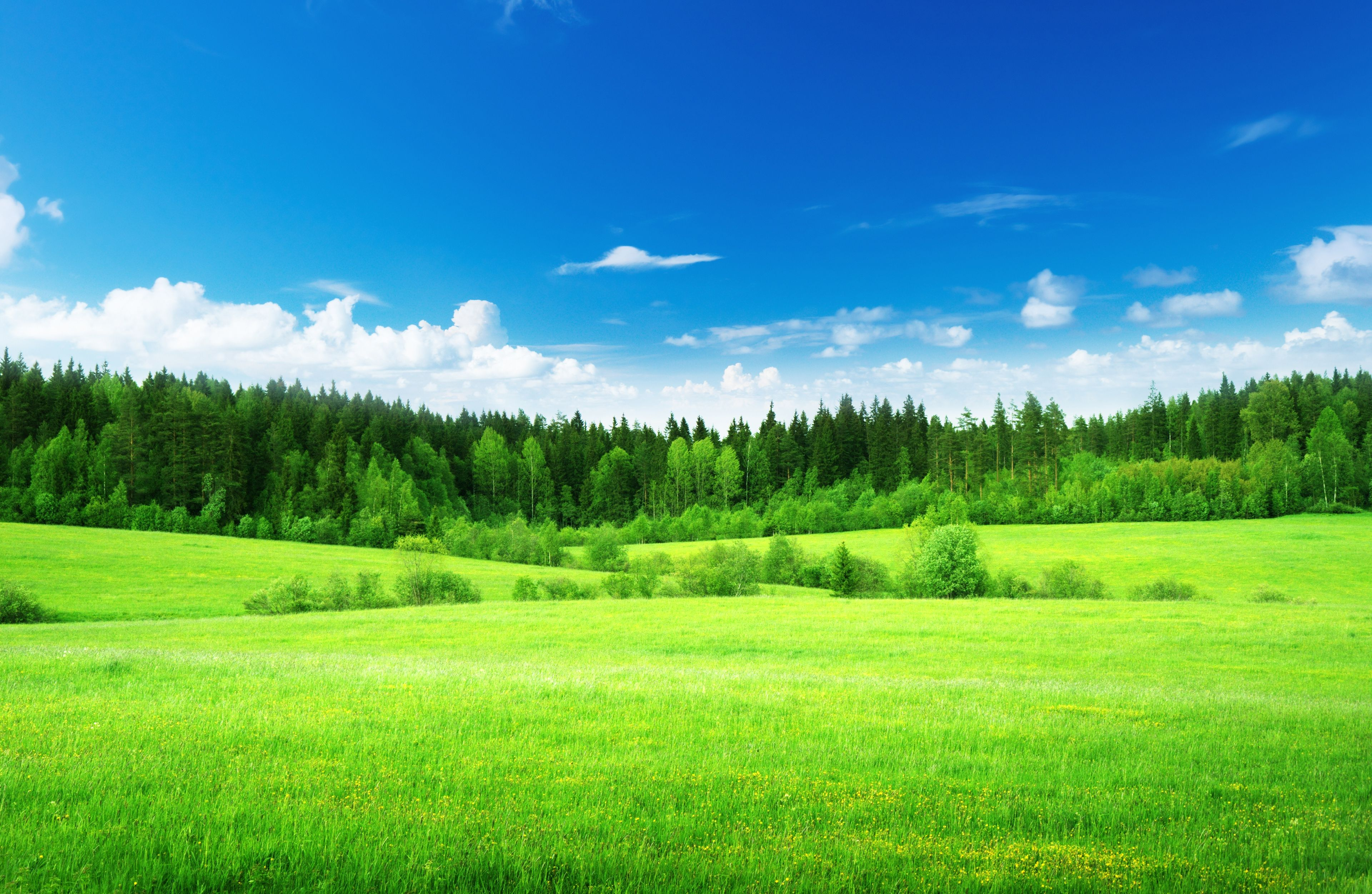 Wallpapers Green grass, Thick forest, Blue sky, , Nature,